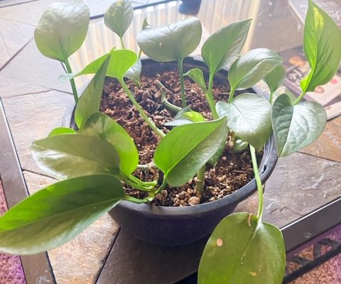 5 House Plants That Are Hard To Kill