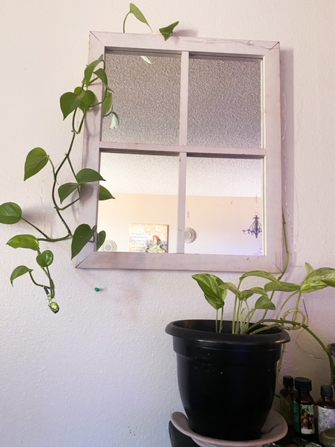 pothos plant hanging over the mirror