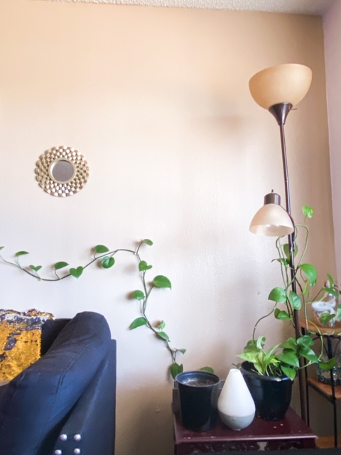 pothos plant climbing the wall